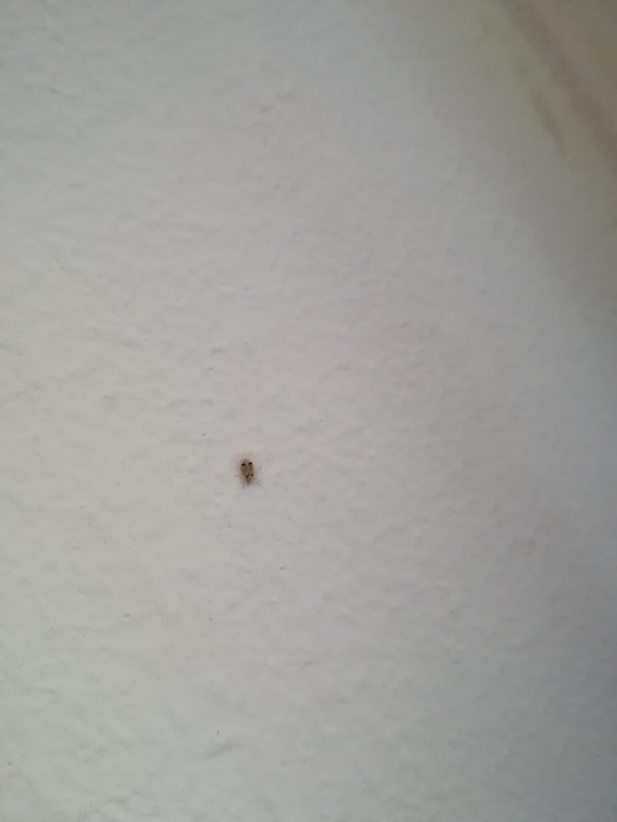Apró fekete repülő bogarak a lakásban