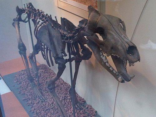arizonai egyetem karbon randizás dinoszaurusz csontok
