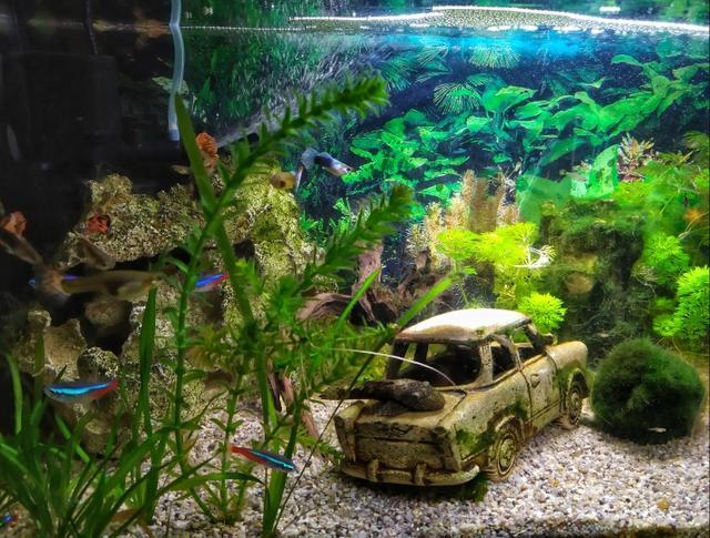 tények az akvárium társításáról kik a konyhai unokatestvérek