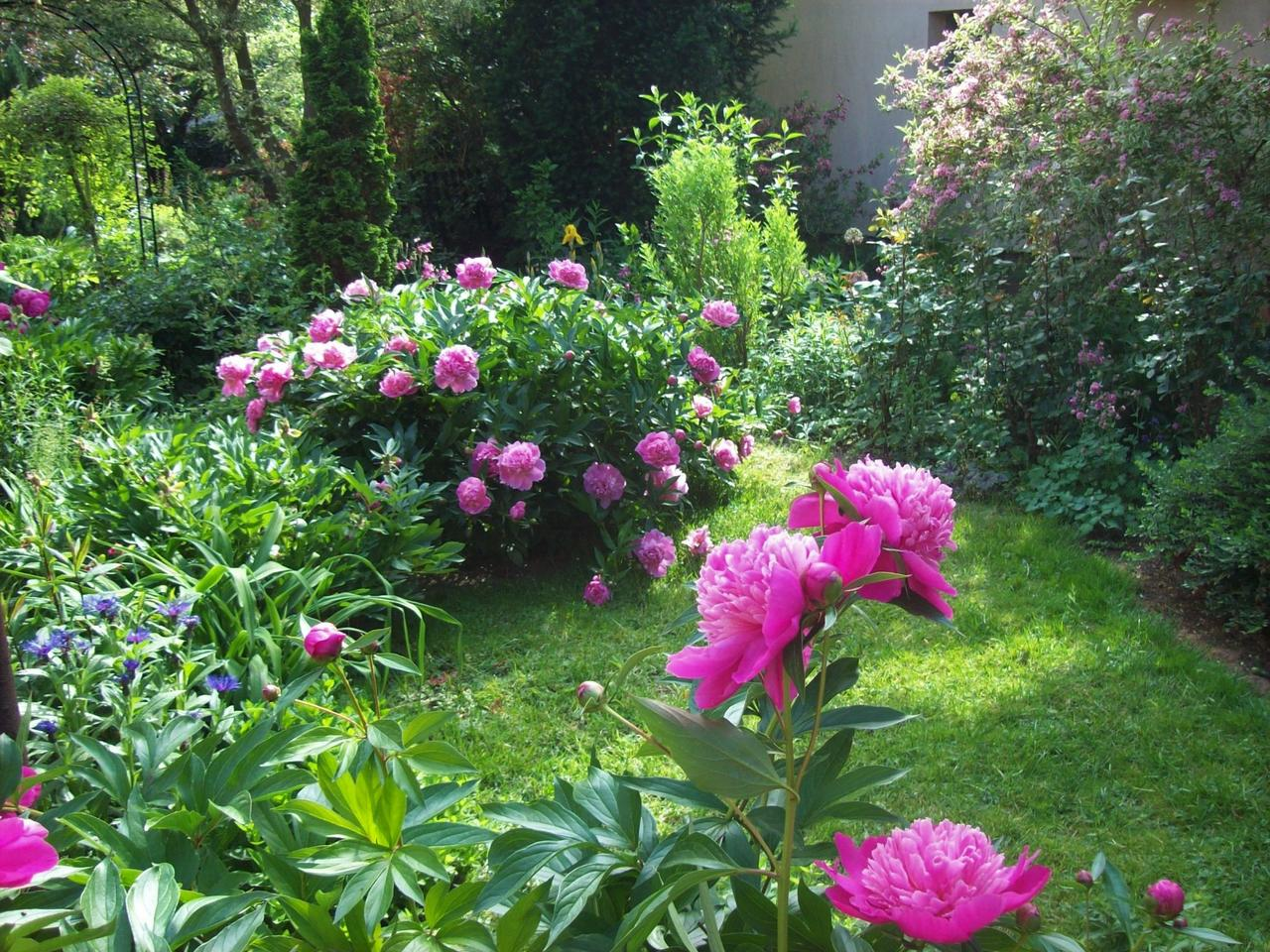 kert növények minden téma jöhet:) Index Fórum