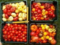 fajtagazdagság-saját termések